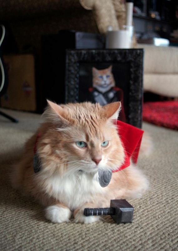 funny cat dressed up - photo #33